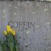 042118 Mount Auburn Cemetery  IMG_5283