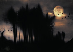 A night on the Dingle