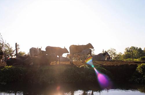 Río Arriba (27)