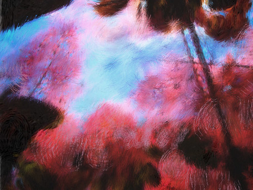 The Purple Smoke Tree using the 'Monet' brush in the photo app Psykopaint