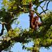 <p><a href=&quot;http://www.flickr.com/people/94209416@N06/&quot;>Seventh Heaven Photography</a> posted a photo:</p>&#xA;&#xA;<p><a href=&quot;http://www.flickr.com/photos/94209416@N06/43022813945/&quot; title=&quot;Sumatran Orangutan (Pongo abelii)&quot;><img src=&quot;http://farm1.staticflickr.com/937/43022813945_2e7e41799c_m.jpg&quot; width=&quot;240&quot; height=&quot;160&quot; alt=&quot;Sumatran Orangutan (Pongo abelii)&quot; /></a></p>&#xA;&#xA;