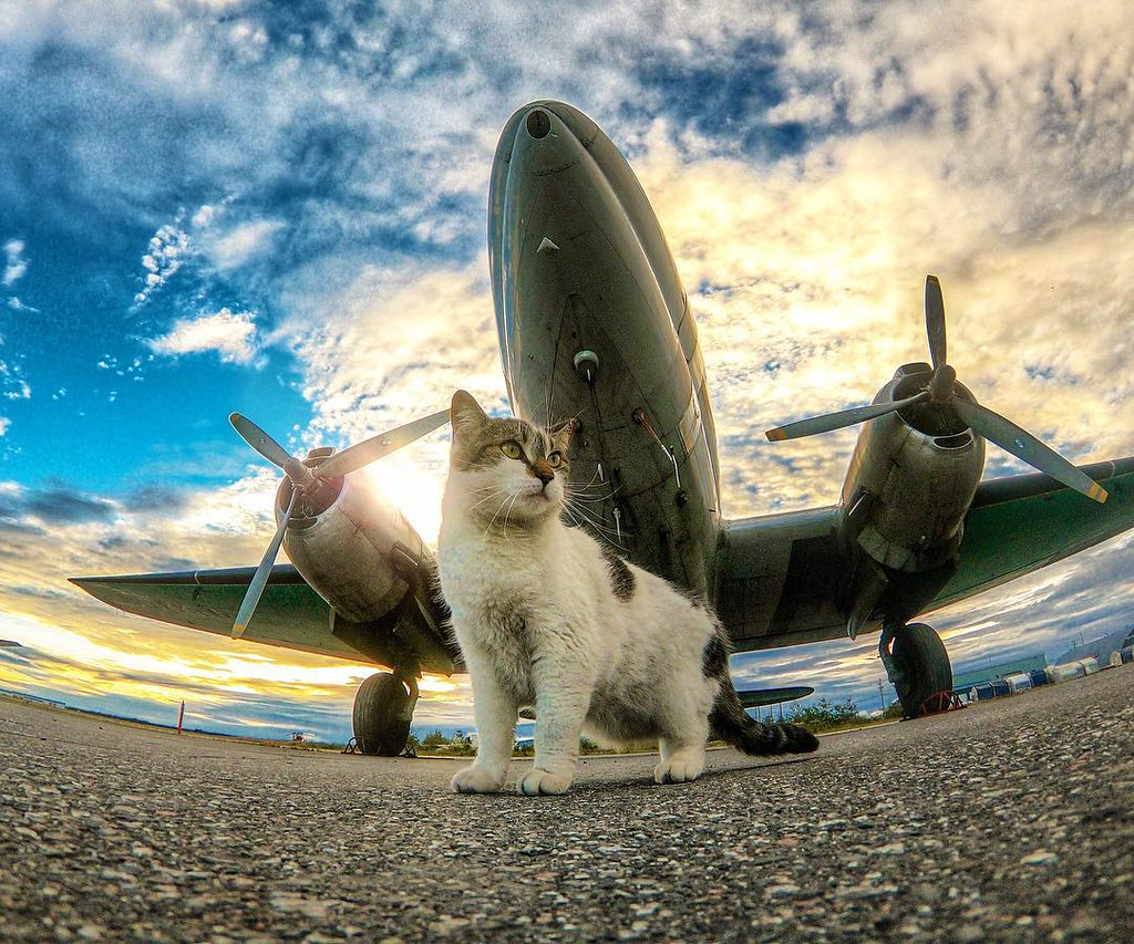 The Feline Employee of the month is Dottie the hangar cat