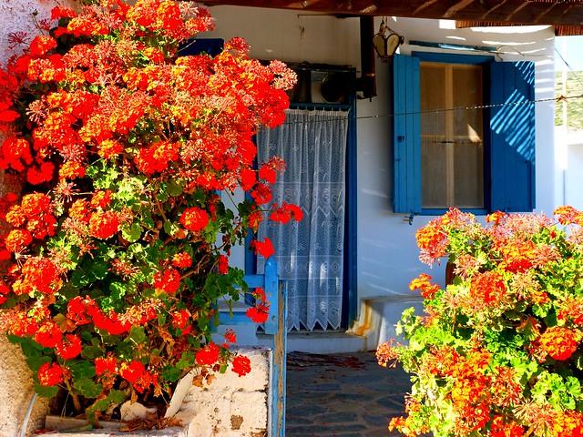 Facade with geranium
