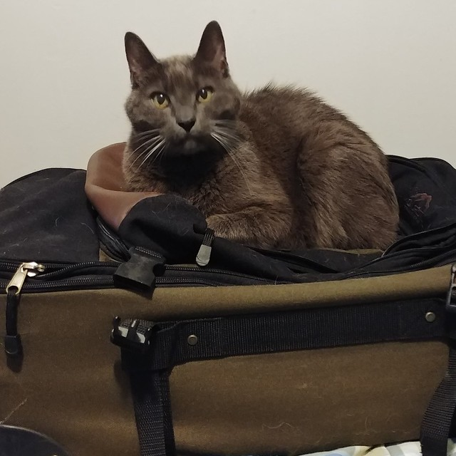 Going somewhere?