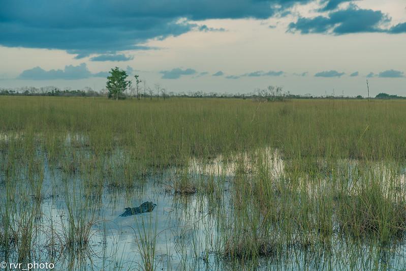 Everglades NP - Pa-hay-okee Overlook