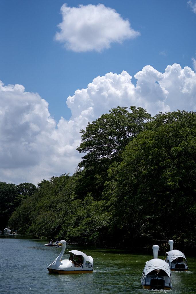 Loxia 2.4/85 Inokashira Park 1