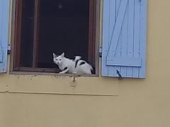 IMG_20180722_121631332 cat in La Force, Aude, Occitanie, France : 22 Jul 2018