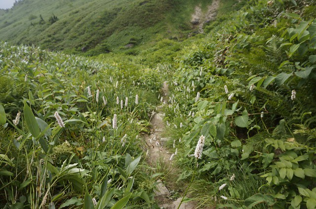 The Way in the sky for Mt. HAKUSAN BESSAN