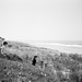 Eastcoast - OlympusOM2n | Delta 100 by scottlittle.nz