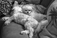 Napping among the pillows