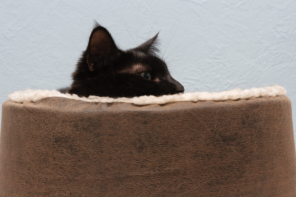 A side view of our cat Emma as she relaxed in a heated cat bed