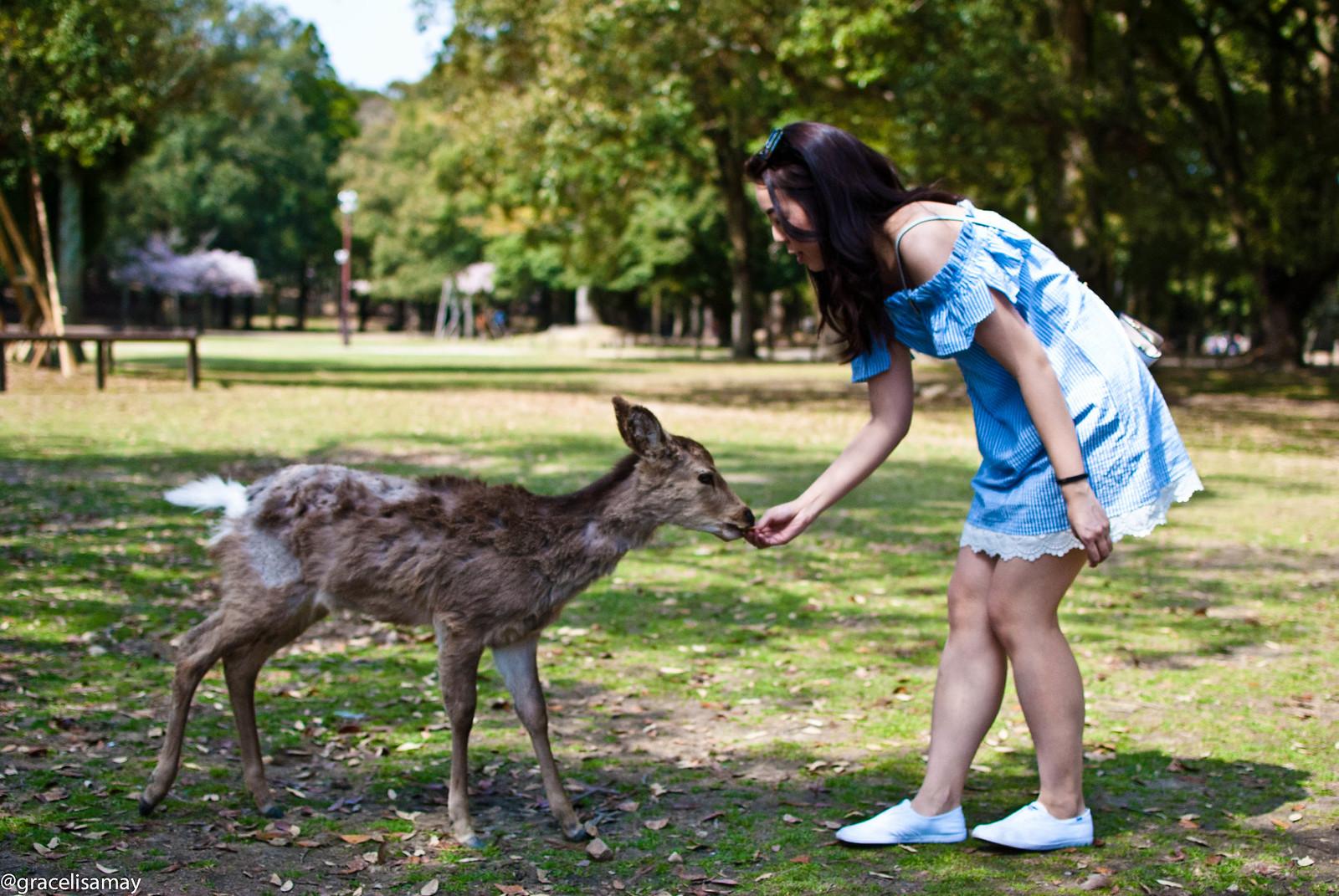 Japan: A day at Nara Park