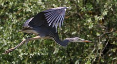 Romania - Birds
