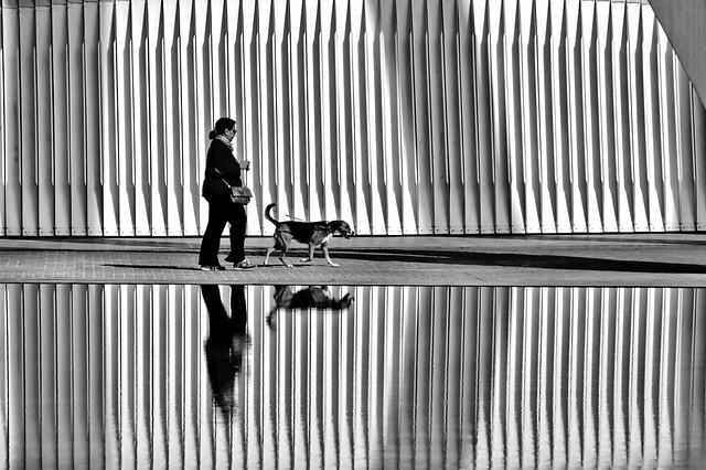 Walking the dog (explored)