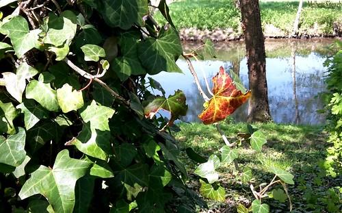 Du jardin aux bords de l'Eure  (Chartres-28-Eure& Loir)