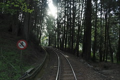 track to the wood