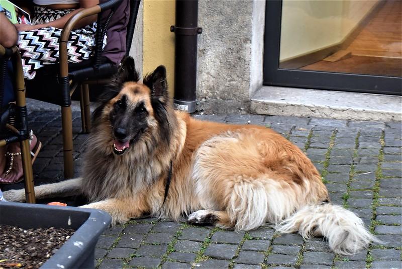 Dog 25.07 (3)