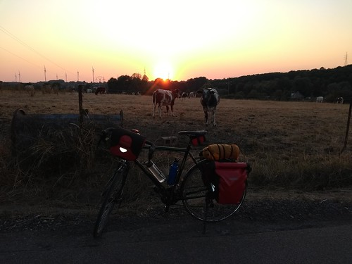 My horse and the cows