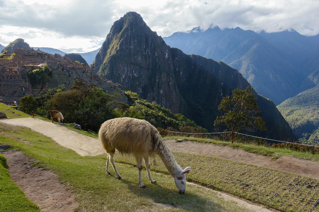 Machu Picchu-05604