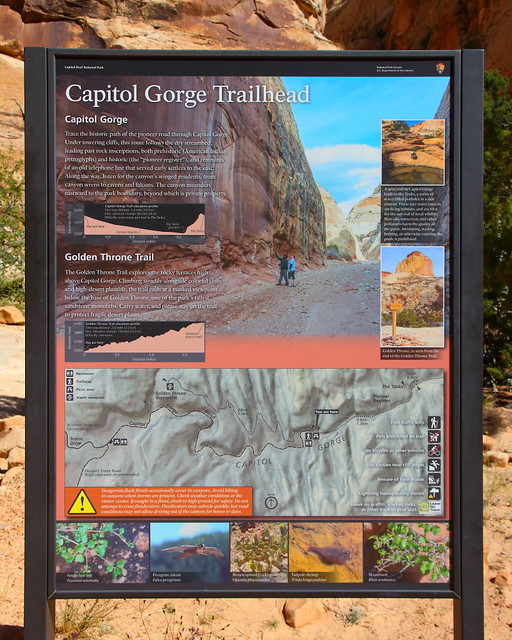 IMG_7669 Capitol Gorge Trail, Capitol Reef National Park