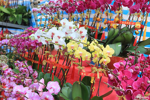 Lunar New Year Fair 2018