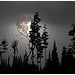 """""""Forest by moonlight"""" by martinshore"""