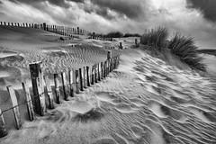 L'Espiguette Beach Dune