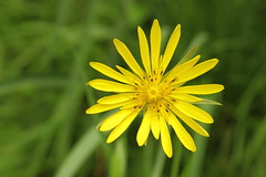 Mount Dajti National Park - flower 2
