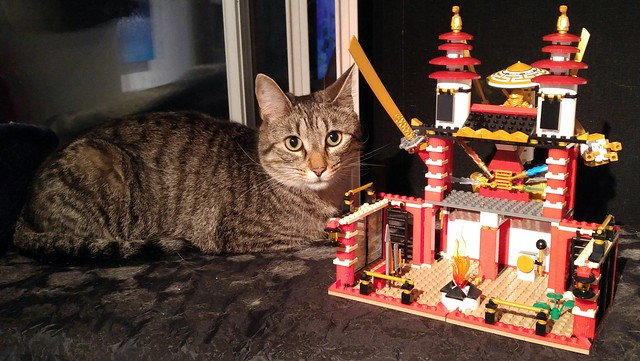 SOL 2018 Day 37 - Temple Of Light To Moderate Cat Hair