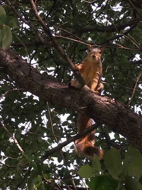 Dallas TX Cemetery Squirrels