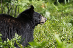 My First Bear