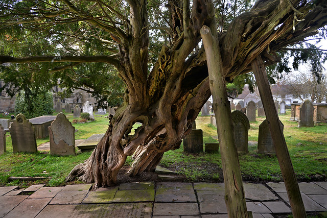 Over 1000 years old