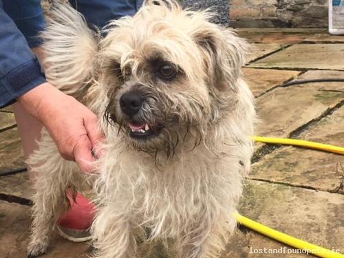 [Reunited] Wed, Aug 1st, 2018 Found Male Dog - Thornton, W91 Wy68, Kildare
