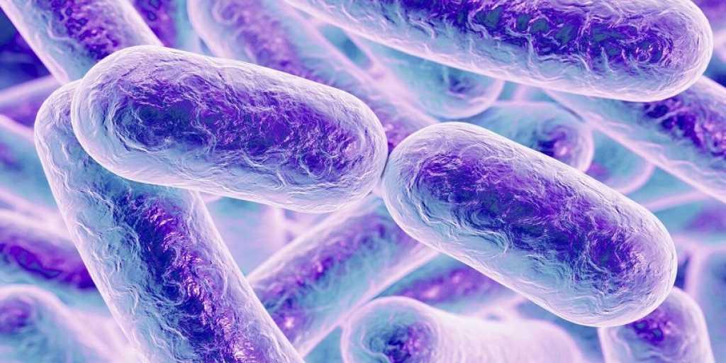 Des bactéries pour produire de l'électricité dans une «armure»
