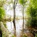 Swamp at Gungywamp