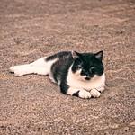 20180715-151110 - Katze auf dem Hof