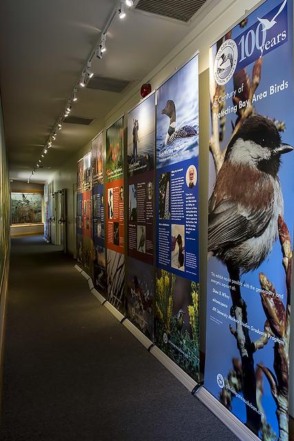 Golden Gate Audubon Society Centennial Exhibit can be seen at Coyote Hills Regional Park