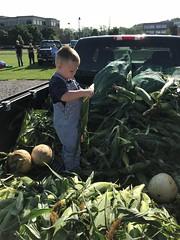 Boy Shucking Corn