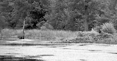 Beaver Lodge at the pond