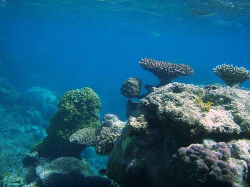 Great Barrier Reef off Port Douglas