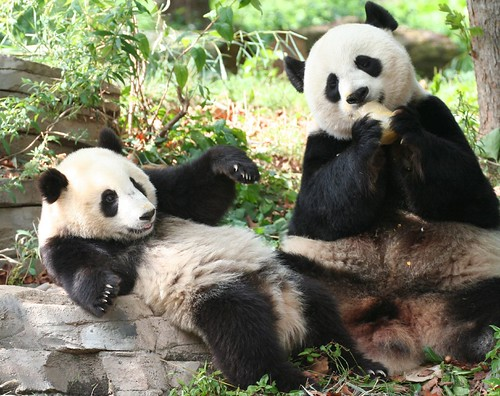 Mommy did you hear about the news about auntie Lun Lun?