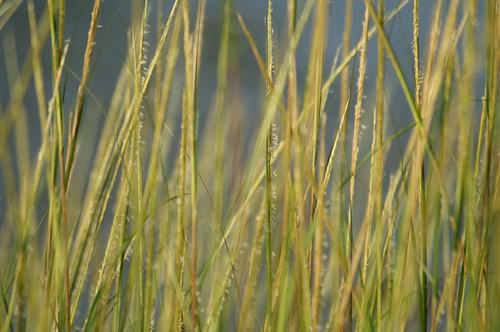 park summer grass reeds geotagged afternoon dof bokeh connecticut sunday newengland ct august summertime recreation stamford longislandsound covebeach