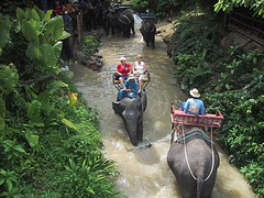 Elephant Ride To Big Buddha