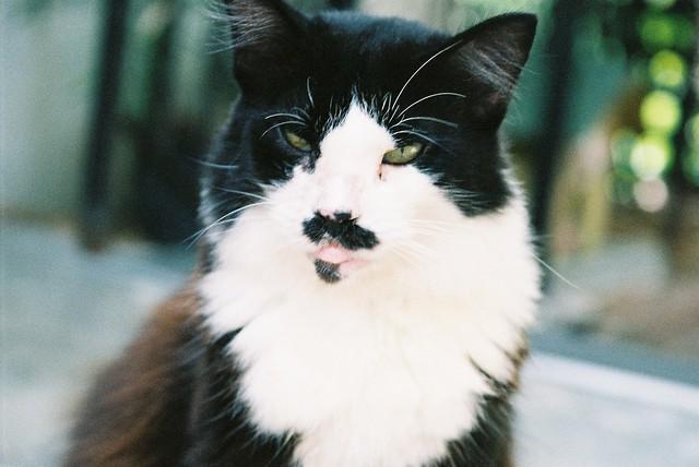 charlie chaplin cat | ...