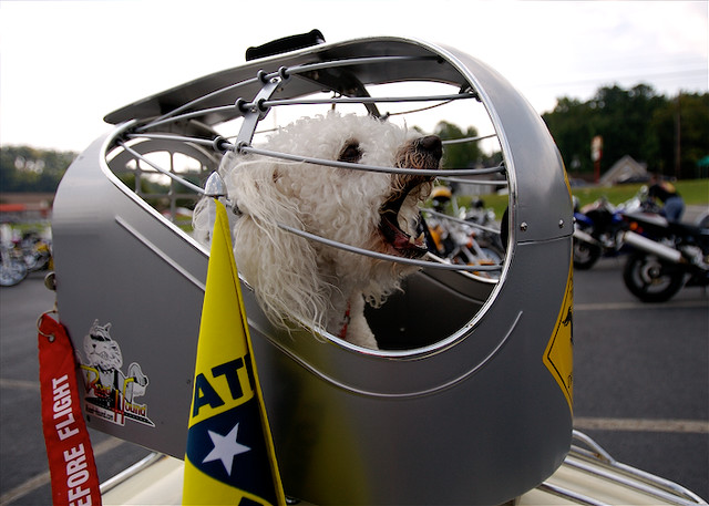 Road Hound | A motorcycle-mounted dog kennel, for the ...