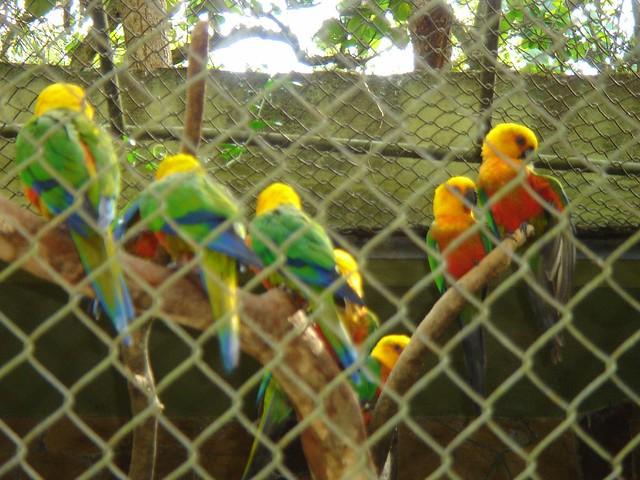 Photo:Jandaya parakeet - 後ろ姿 #9 By Carol^-^