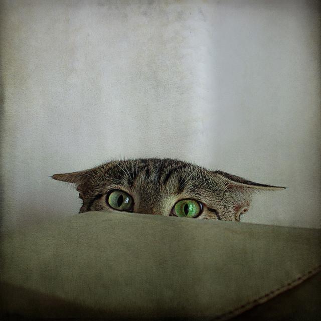 il prépare son attaque !!! cat_Portrait