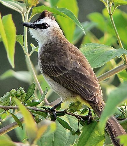 Indonesia - Burung Indonesia | BirdLife