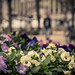 Spring in the city / Printemps en ville