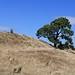 Burrough Hill fort